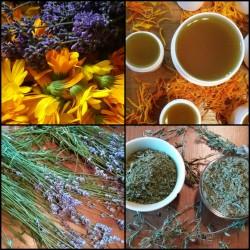 Jarní detox a byliny